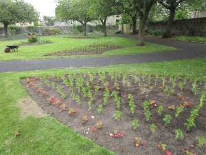 new planting 2